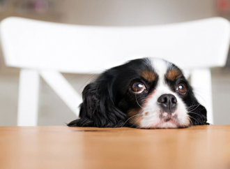 4 Tips For Preventing Your Dog From Begging Or Eating People Food