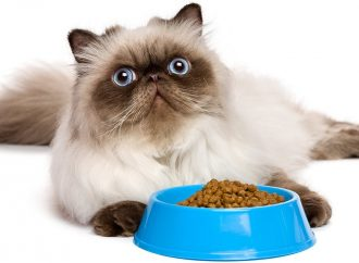Find The Best Ways To Choose Premium Cat Food In Bangalore
